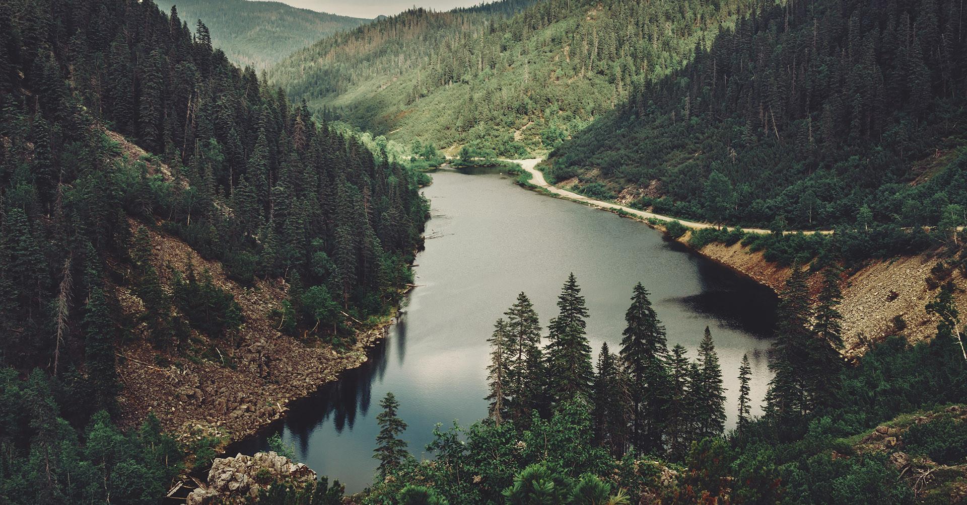 Oroszország 640 milliárd fával küzdene a klímaváltozás ellen